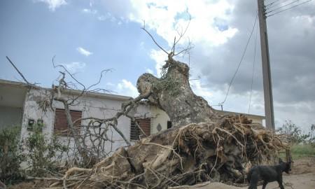 Poblado cubano tras el paso de un huracán Foto: Kaloian Santos