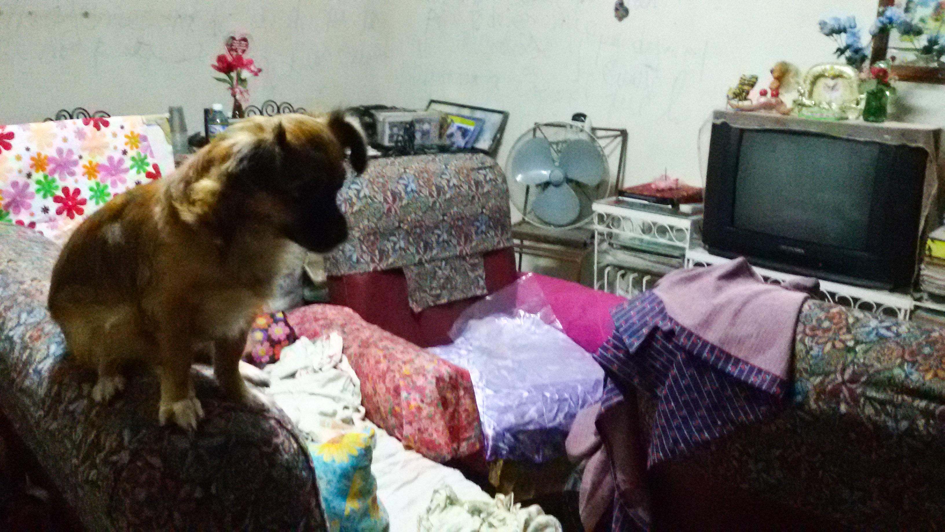 La casa que habita, en compañía de su perra y tres pollitos (Foto: Mónica Baró)