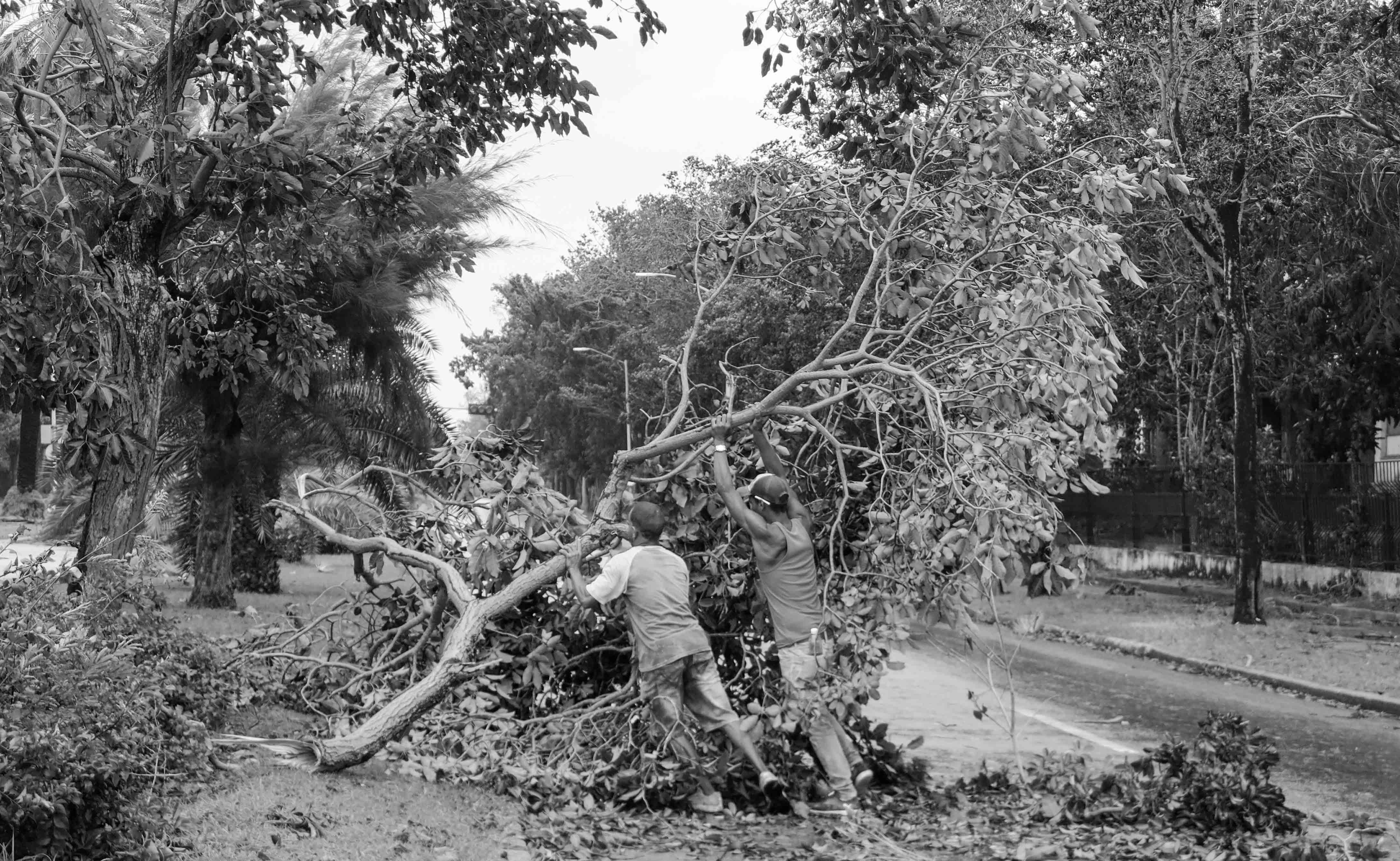 A pesar del desastre, desde que amaneció los vecinos y brigadas del Estado se movilizaron para despejar los caminos y facilitar la circulación (Foto: Mónica Baró)