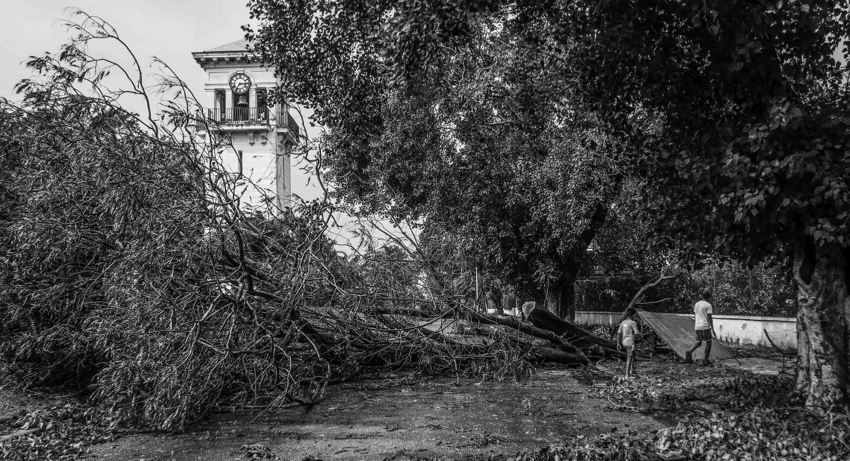 A pesar de que La Habana no fue una de las ciudades donde el huracán Irma tocó tierra, la fuerza de sus vientos sí movieron cimientos y raíces (Foto: Mónica Baró)