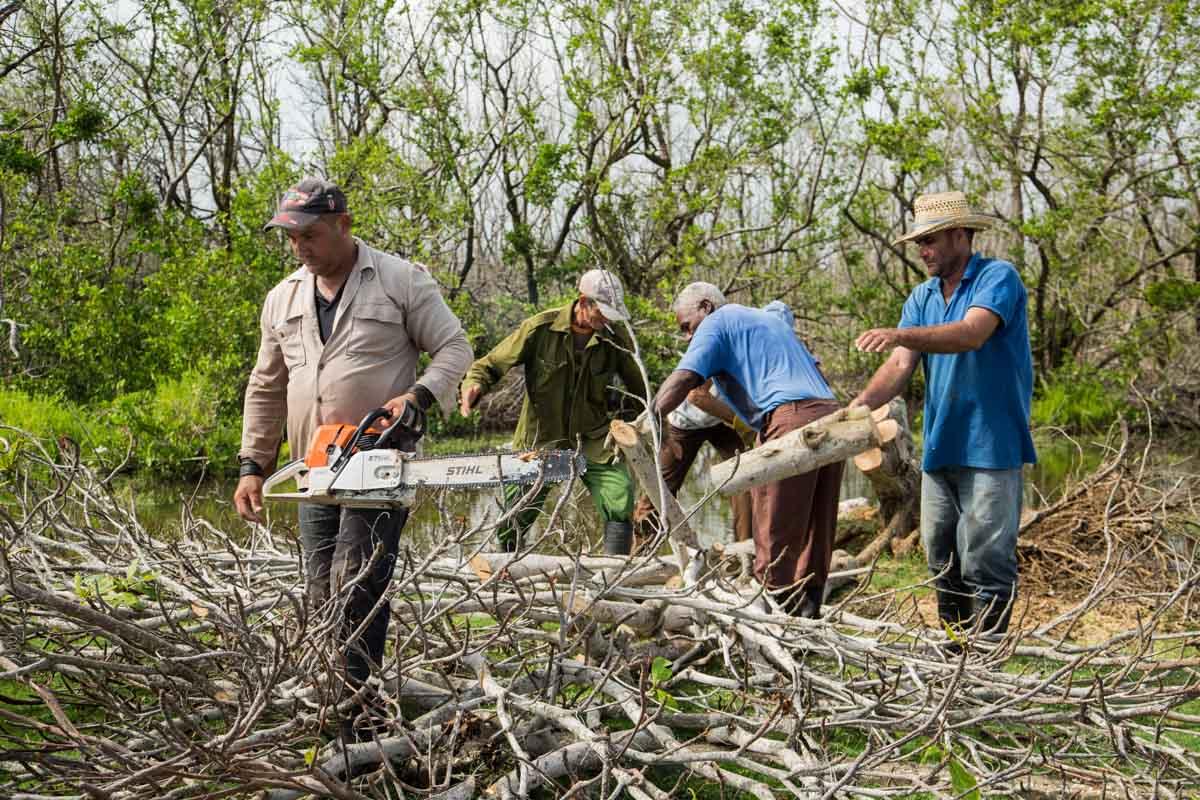 Parque Nacional de Cáguanes tras el paso del huracán Irma (Foto: Jorge Ricardo)