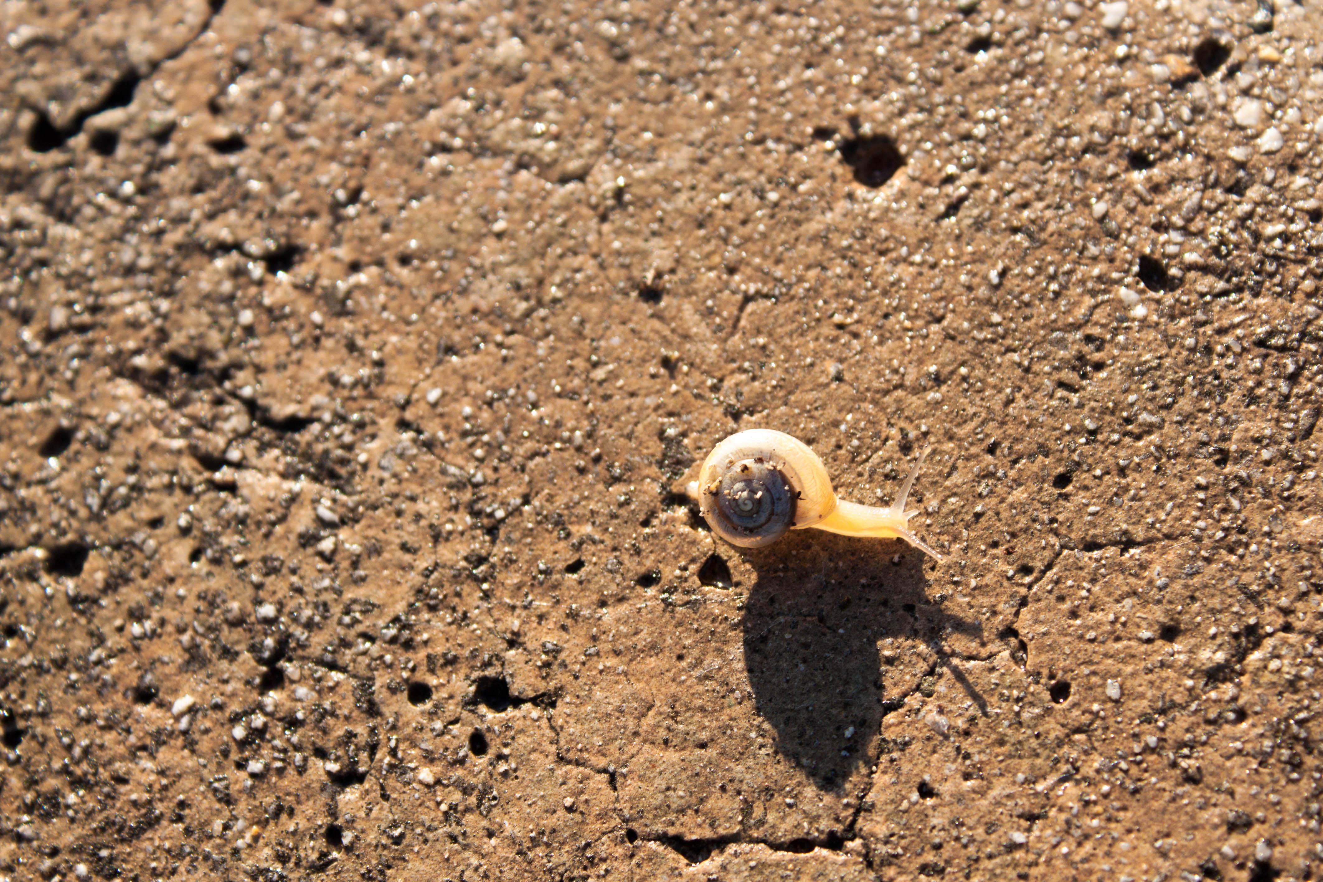 Especie de molusco invertebrado (Foto: Jorge Ricardo)