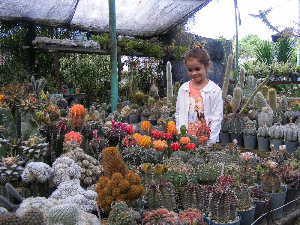 Este patio, cuyo nombre oficial es Patio Las Orquídeas, colabora directamente con el jardín botánico de la Universidad de Matanzas