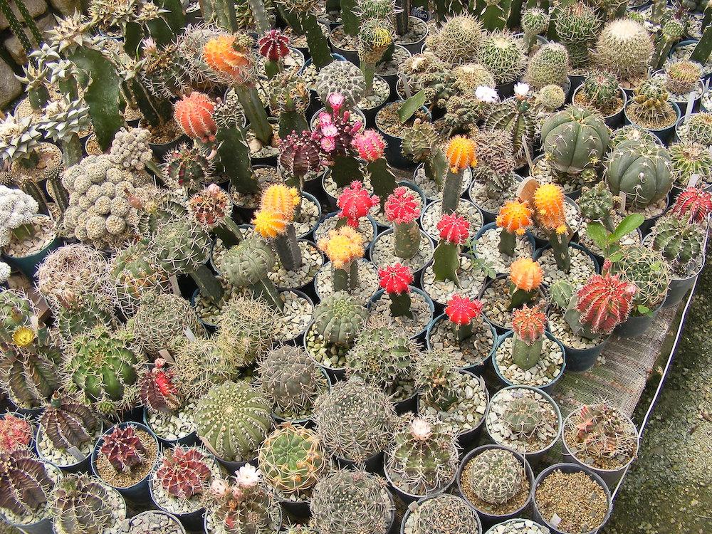 El proyecto en sí, tiene 38 años de creado, cuenta con un total aproximado de 3086 especies de plantas, de ellas, 435 son orquídeas, 955 cactus, suculentas 476, helechos 125 y otros géneros 1095.