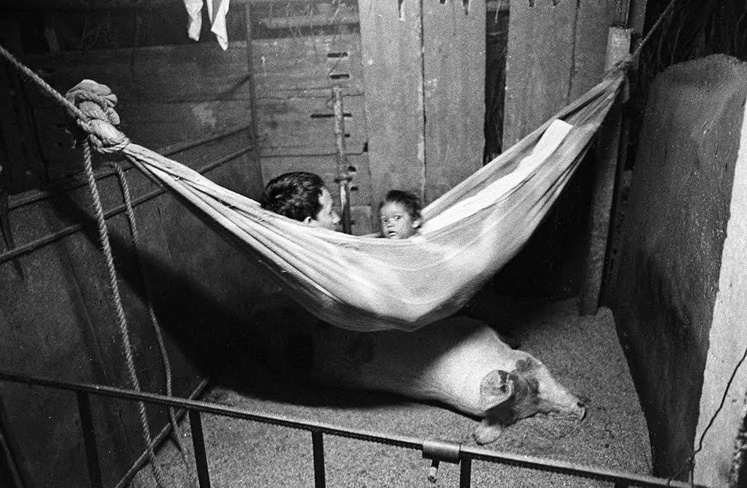 En 2006 hice la ruta martiana junto a Juan Carlos Alom y Felco Calderín. Camino a Mella, nos albergamos una noche en casa de esta familia. Recuerdo su hospitalidad. La señora, embarazada, mató un pato para nosotros y a él lo acompañamos toda la noche mientras velaba el parto de su puerca. En su muy humilde finca, este parto representaba una buena oportunidad de ingresos. (Foto: Raul Cañibano).