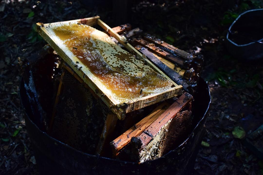 Los panales, luego de que se les saca la miel y la cera, son reparados y vueltos a usar (Foto: Marcos Paz)