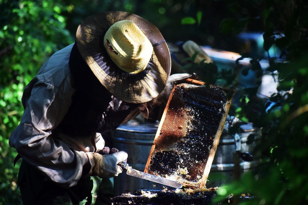 Luis Alberto Pérez va quitando la cera y la miel de los panales con una cuchilla (Foto: Marcos Paz)