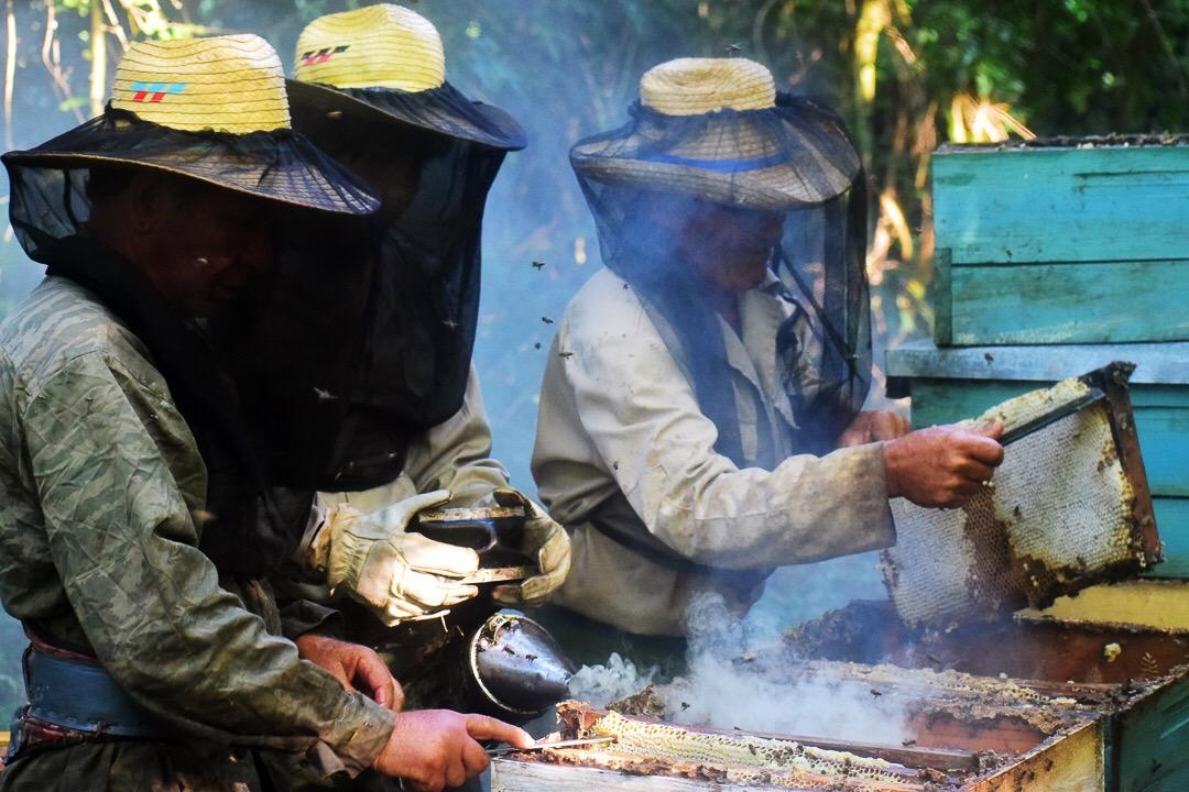 Castrar es un proceso que tarda horas (Foto: Marcos Paz)