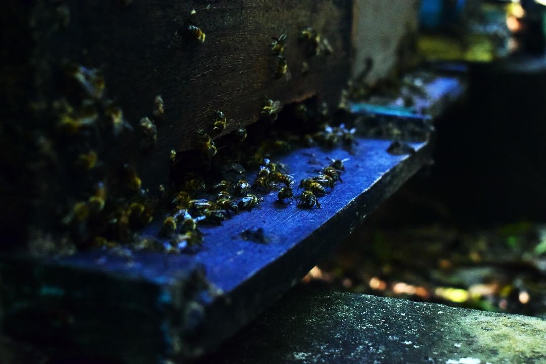 En la base de la colmena hay una pequeña abertura llamada piquera, por donde van y vienen las abejas (Foto: Marcos Paz)