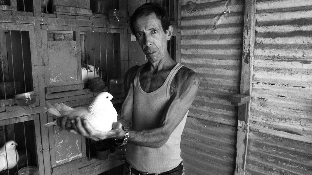 Alberto Gutiérrez tiene 62 años y 45 de ellos los ha dedicado a la cría de palomas. Es uno de los más antiguos palomeros que hay en el país y pertenece a la Federación Colombófila de Cuba. Cuando lo fotografié, hace no más de tres meses, tenía un estimado de 30 palomas para cría y en buen estado. En su azotea de Centro Habana me hablaba con orgullo de sus distintos premios y reconocimientos (Foto: Alberto (El Chino) Arcos).