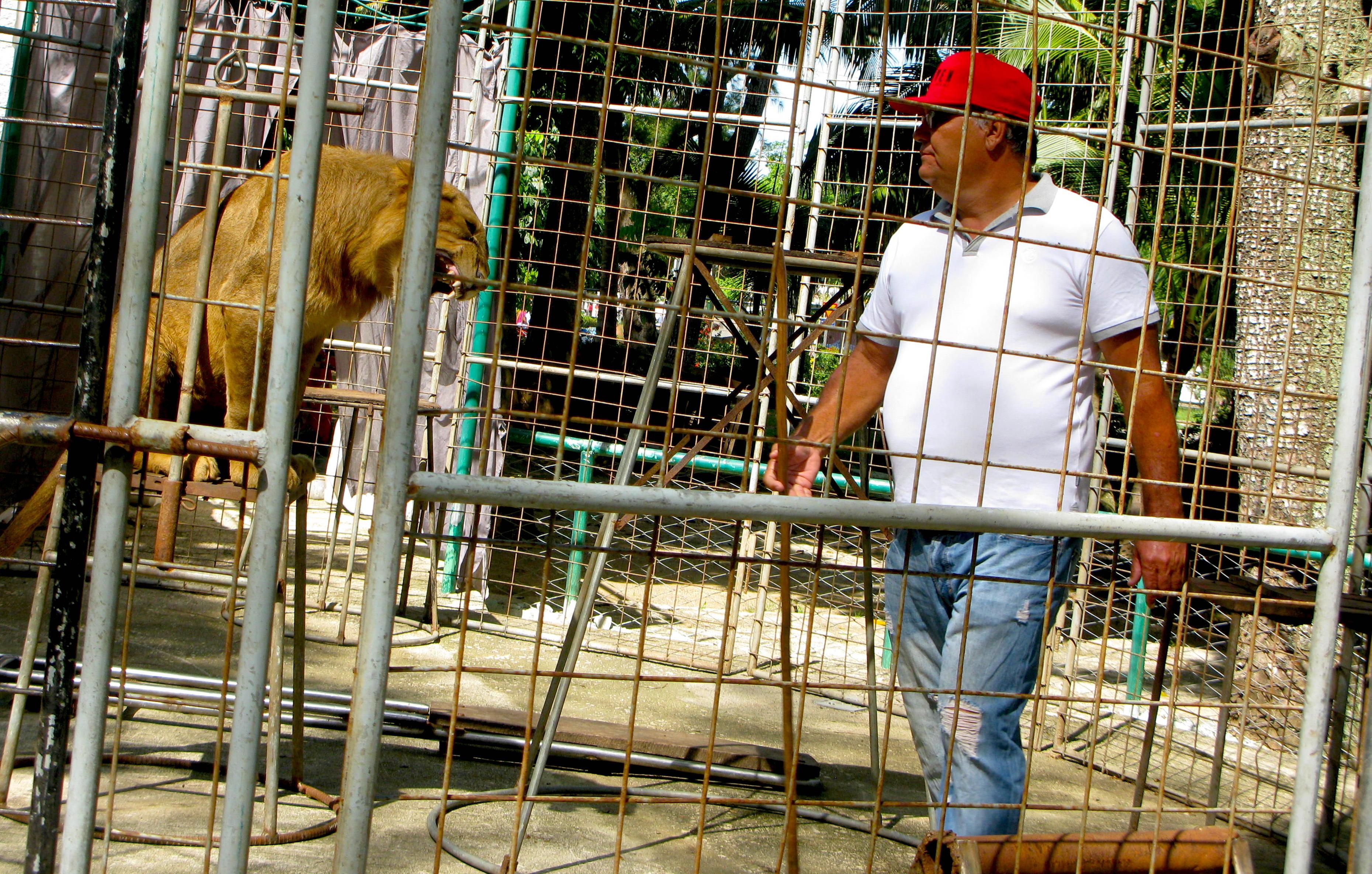 Landy, el domador, en el espectáculo con leones de los domingos (Foto: Yoe Suárez).