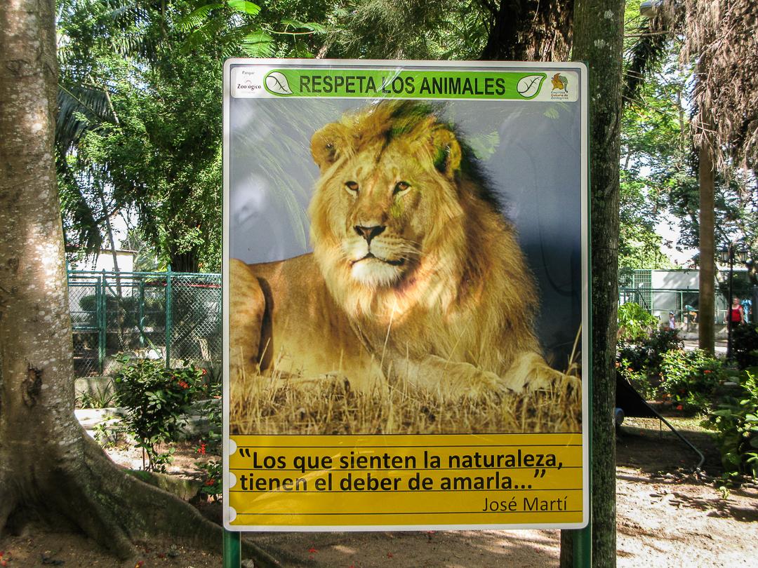 Cartel en el Casino Campestre, lugar donde se ubican los leones del Circo Areíto (Foto: Yoe Suárez).