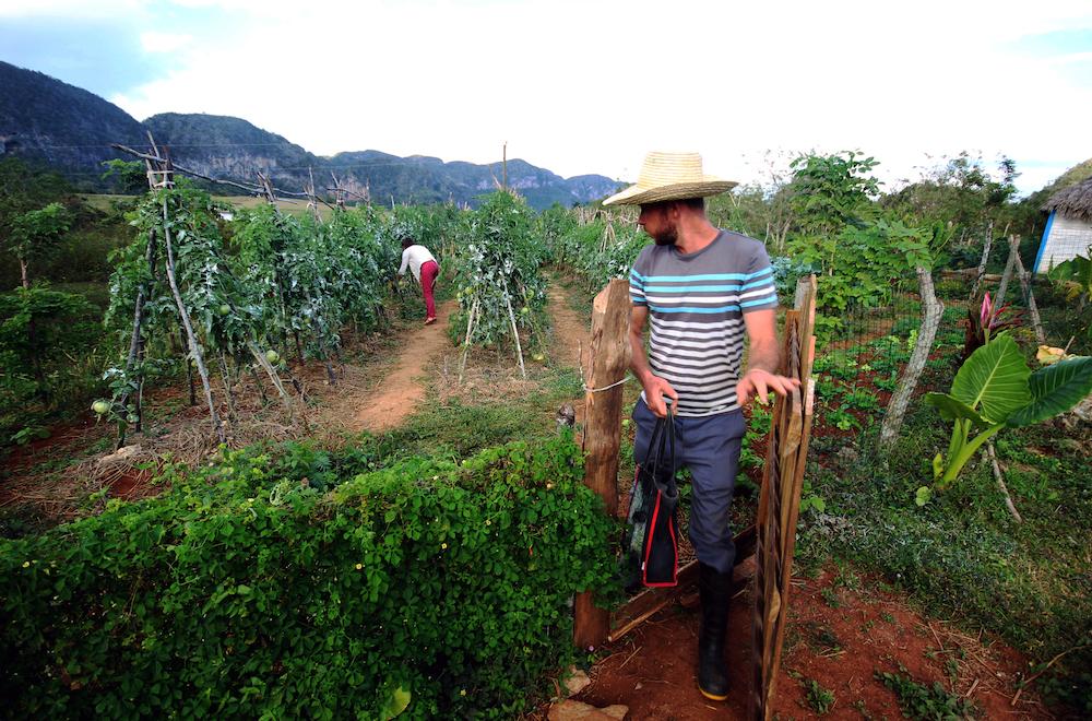 La finca de Perico ocupa solo una hectárea de tierra (Foto: Alba León Infante)