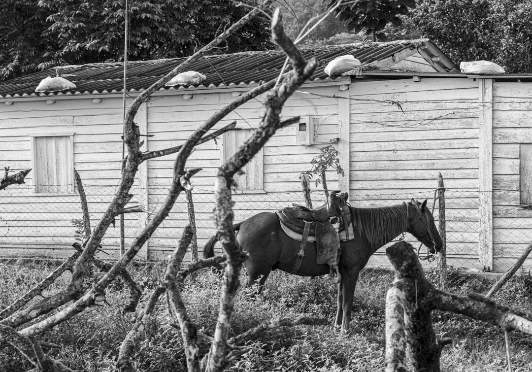 La mayoría de las casas de la comunidad Hoyo del Guamá están hechas de madera de pino y de palma. Sus techos están cubiertos de sacos de arena para afianzarlos, y evitar que salgan volando por algún posible ciclón o tormenta, que suelen ser frecuentes en la zona más occidental de Cuba (Foto: Lázaro Lemus).
